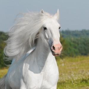 Je, cheval...