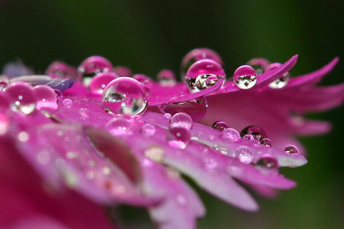 Pailletant chaque fleur d'une humide étincelle...