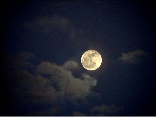La biche brame au clair de lune...