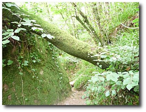 Chemin vers la stèle dédiée à Victor Segalen dans la forêt du Huelgoat.